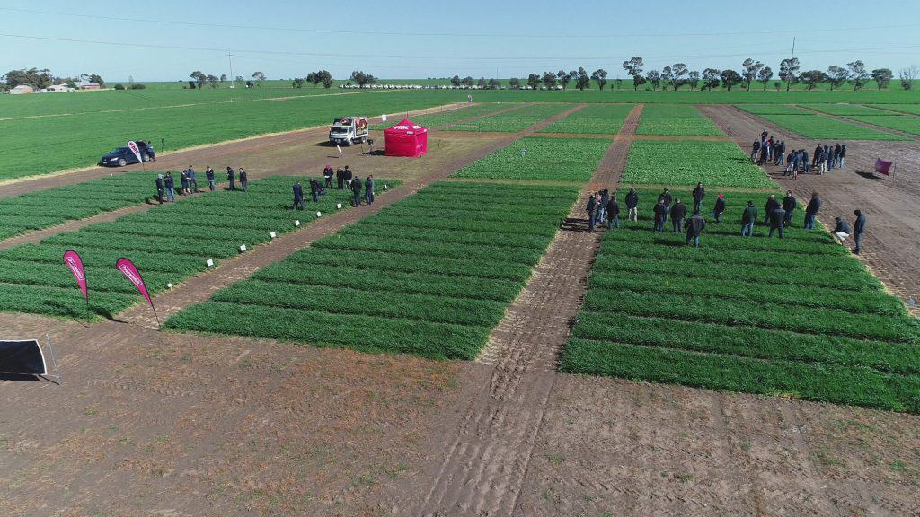 FMC Roseworthy Field Day, Aug, 2019
